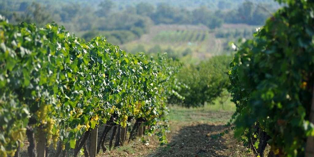 Wines of Konavle